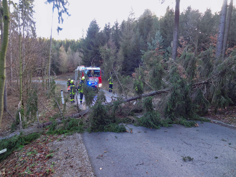 Abgebrochene Bäume blockieren Landesstraße